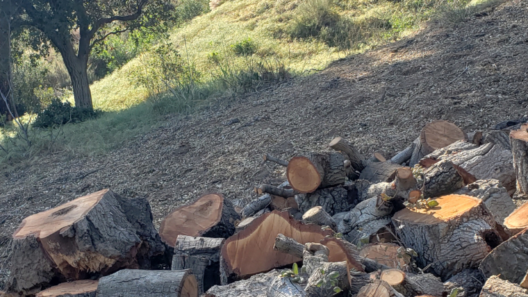 Friendship and Firewood